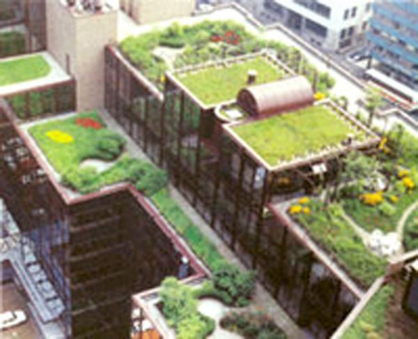 Drawing of roof top gardens