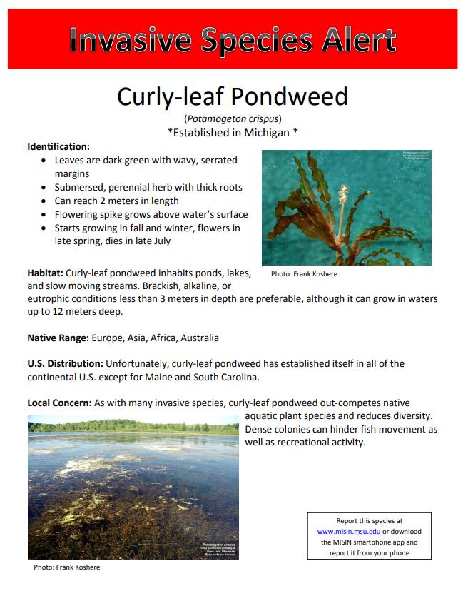 Submerged Aquatic Vegetation | Muskegon Clean Water, MI